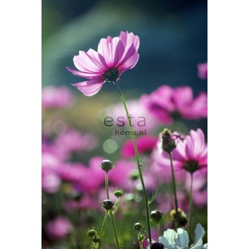 fotomural flores silvestres rosa