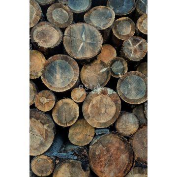 fotomural troncos de madera marrón
