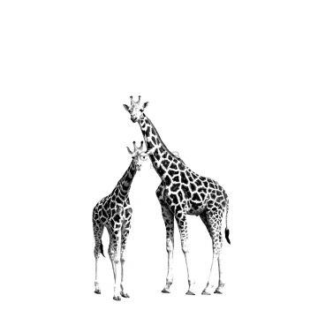 fotomural jirafas negro y blanco
