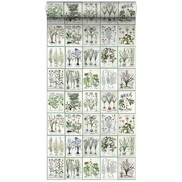 papel pintado XXL páginas de un libro botánico de flores y plantas gris claro cálido y verde