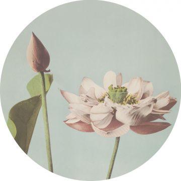 mural redondo autoadhesivo flor de loto rosa suave y azul agrisado