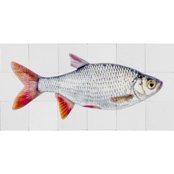 mural decorativo autoadhesivo pez gris y rojo